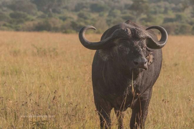masai-mara-3