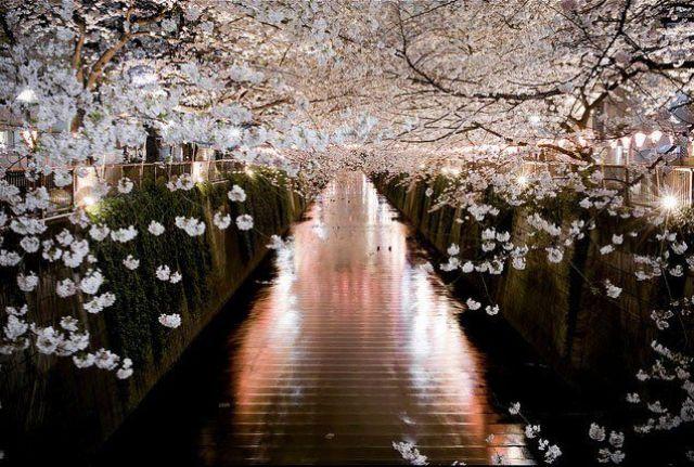 sitios-que-no-te-puedes-perder-en-japon-hanami