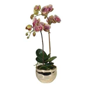 Dusty pink orchid in small gold pot