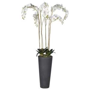 White orchid in tall grey plant pot