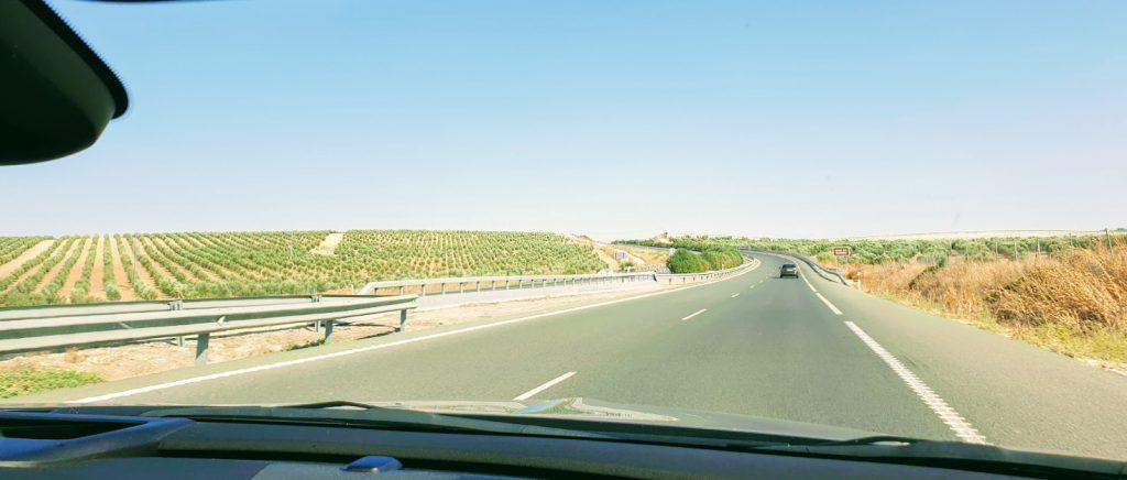 Korona road trip 3597 oliivipuita, Espanja