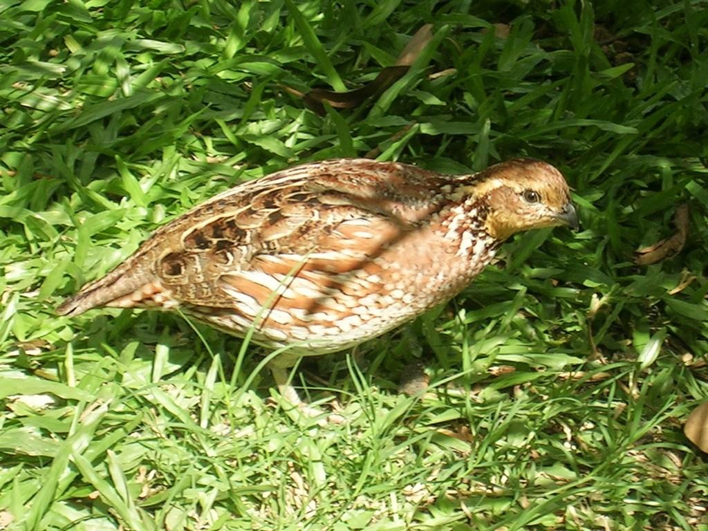 Elämäni paras lomamatka Barbados Bird Sanctuary (Chancery Lane Swamp)