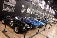Shelby Heritage - 4