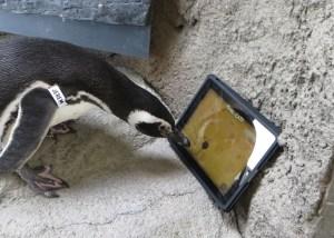Jeremy pingüino