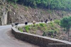 Cabres a la carretera general