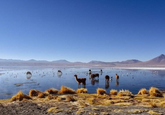 Bolívia, món andí