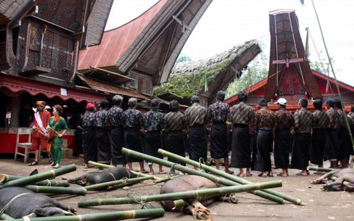 Toraja cerimònia