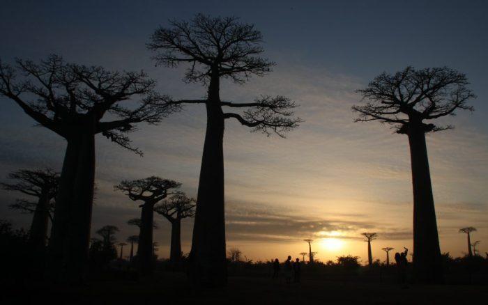 Baobab Morondava