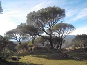 grupo de árboles small