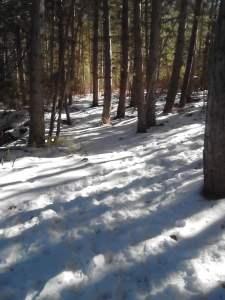 camino con nieve en el bosque