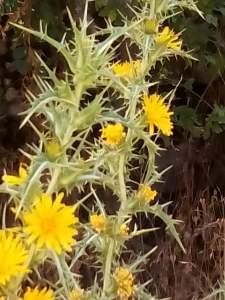 cactus small