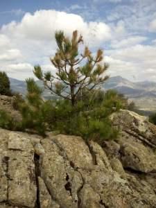 árbol creciendo desde la piedra s