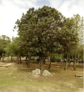 árbol y piedras s