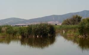 agua y horizonte s