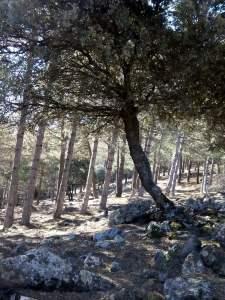 grupo de árboles s