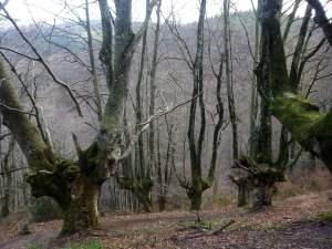 troncos de árboles s