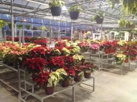The inside of Vandermeer store - getting ready for Christmas 2016.