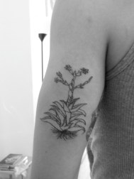 Maguey 2 Tattoo by Gerardo Garduño