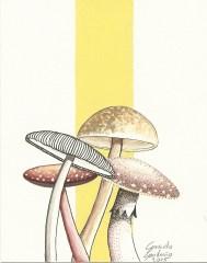 Watercolor / Paper 4 x 5.5 in 2015