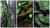 manifiesto-ayahuasca