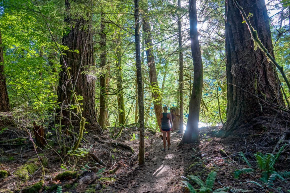 north cascades national park, newhalem campground, hiking, pacific northwest, washington state