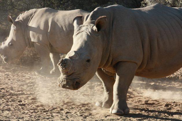 Safari próximo da Cidade do Cabo 22
