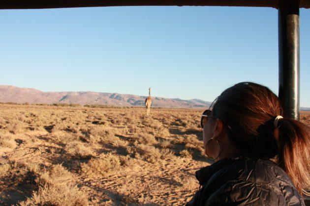 Safari próximo da Cidade do Cabo 24