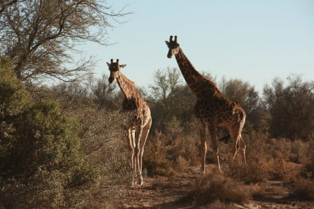 Safari próximo da Cidade do Cabo 21