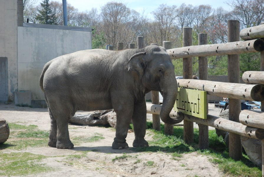 MassArt students create toys big enough for elephants