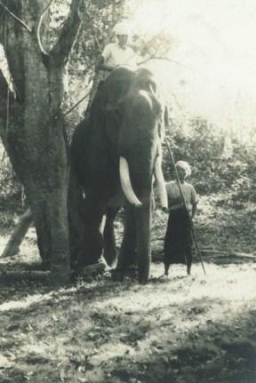 Tuskers in Burma