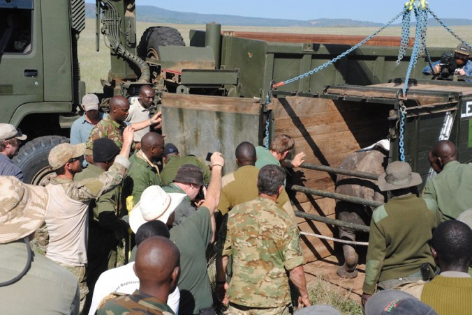 loading rhino for transport