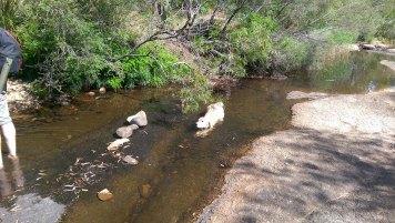 Blackheath Weekend Day 1: Happy Wet Dog