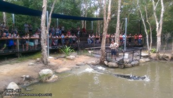 Hartley's Crocodile Adventures, June 2015: Crocodile Feeding Show