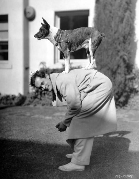 robert-montgomery-dog
