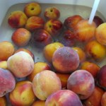 Photo Sunday – Fresh Peaches and Home Canning (Food Preservation)