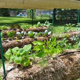 Straw Bale Garden Update