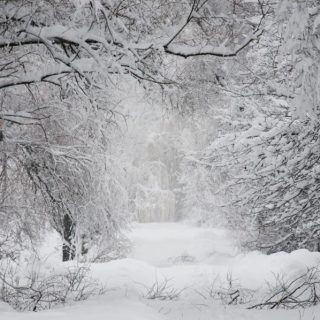 Reflect, Recharge and Restore Through Winter