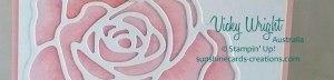Rose-Wonder---Close-Up