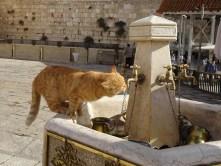 Thirsty puss