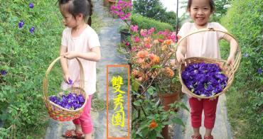 台南賞花景點︱玉井雙秀園︱蝶豆花,自己採自己泡,還有百花爭奇鬥艷,竟然吸引來像蝦子一樣的蜜蜂阿