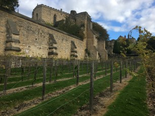 Looking up to the Palace from the other end of the vineyard