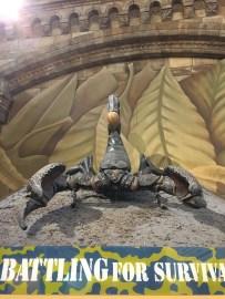 A Scorpion Pandinus imperator