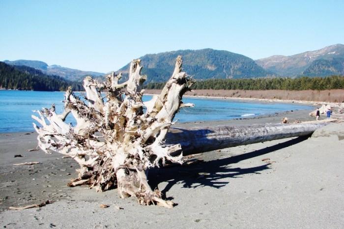 통나무들이 조각품 처럼 독특한 포트 렌프루의 고운 모래 해변