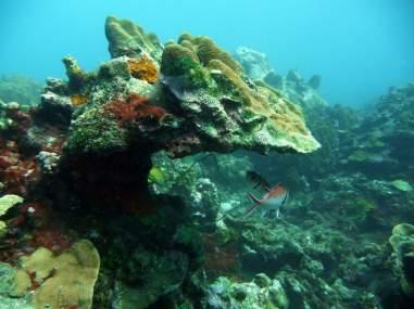 diving-at-kalki-14