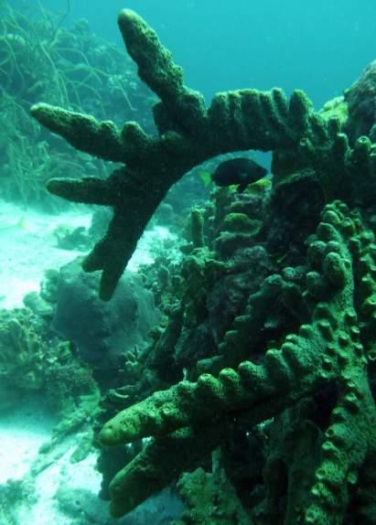 diving-at-kalki-18