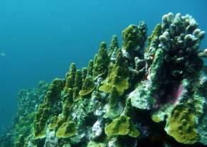 diving-at-kalki-25