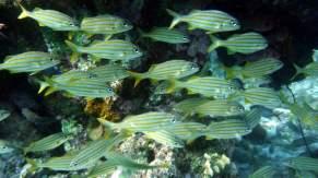 diving-at-kalki-26