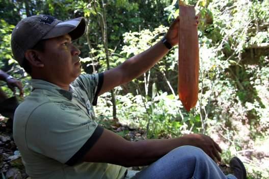 jungle-in-suriname-153