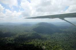 jungle-in-suriname-24