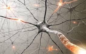 1 nerves images